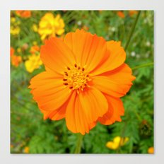orange bloom Canvas Print
