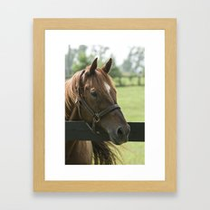 Creator - Old Friends Equine, Georgetown KY Framed Art Print