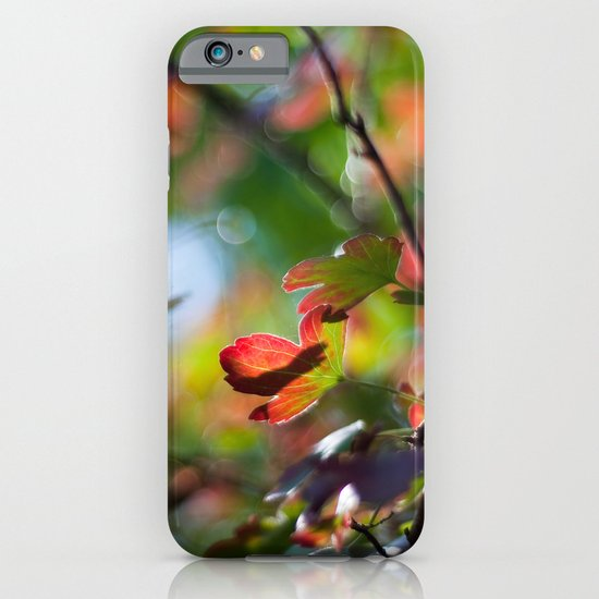 Autumn Rainbow iPhone & iPod Case
