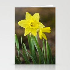 Daffodil Flower Stationery Cards