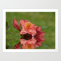 Reflections of a Rhododendron Art Print