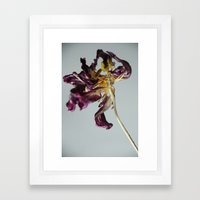 Last Dance Tulip Framed Art Print