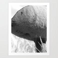 mushroom 2016 IV Art Print