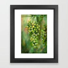 Grapes in the garden Framed Art Print