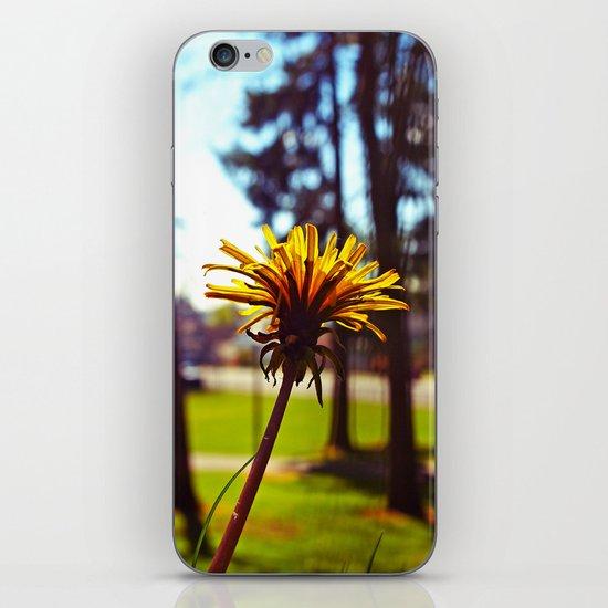 Spring dandelion iPhone & iPod Skin