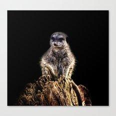 Meerkat Lookout Canvas Print