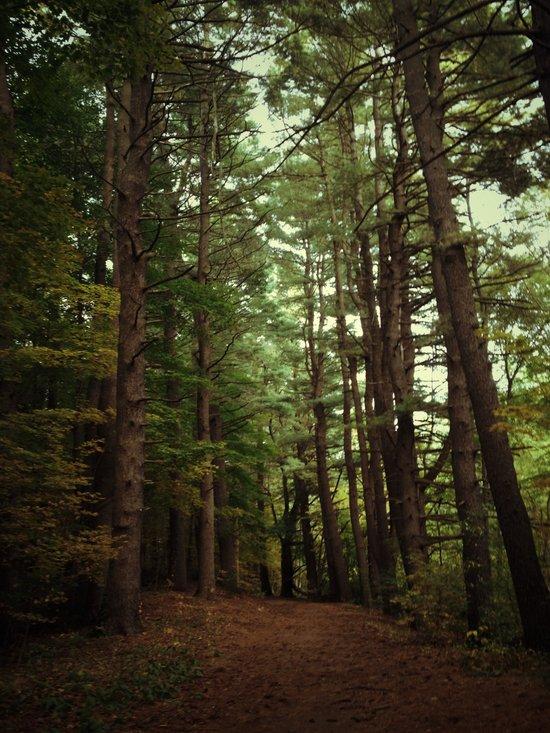 Pine Trail Art Print