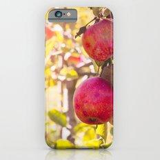 Apple Of My Eye iPhone 6 Slim Case