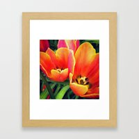 Coral Tulips in Bloom Framed Art Print
