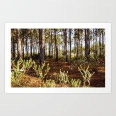 florida forest Art Print