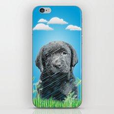 labrador puppy iPhone & iPod Skin