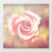 Candy Rose Canvas Print