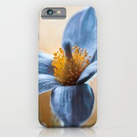 iPhone & iPod Case featuring Pasque by Mandy Disher