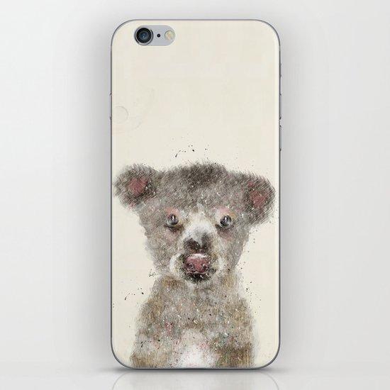 little koala iPhone & iPod Skin