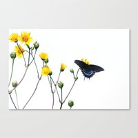 Butterfly Prairie Canvas Print