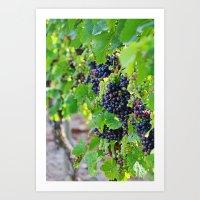 Newport Vineyards Art Print