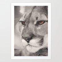 Cougar II Art Print