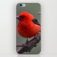 Scarlet Tanager - A Nature Art Print iPhone & iPod Skin