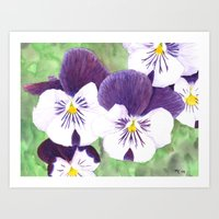 Pansies flowers Art Print