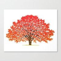 Japanese Maple 1 Canvas Print