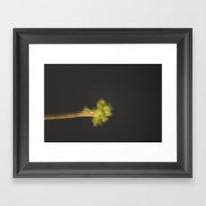 Single Green Palm Framed Art Print
