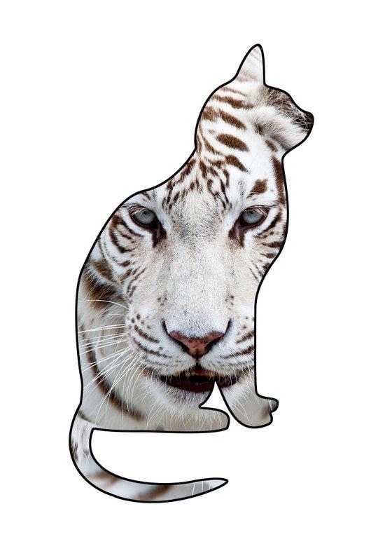 White cats. Canvas Print