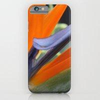 Birds of Paradise iPhone 6 Slim Case