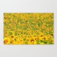 Sunflower 22 Canvas Print