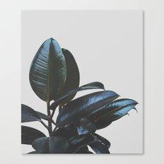 Botanical Art V4 #societ… Canvas Print