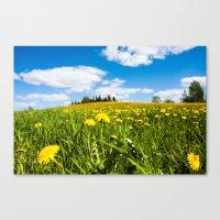 Dandelion field Canvas Print