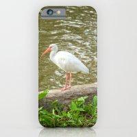 White Ibis Strikes A Pos… iPhone 6 Slim Case