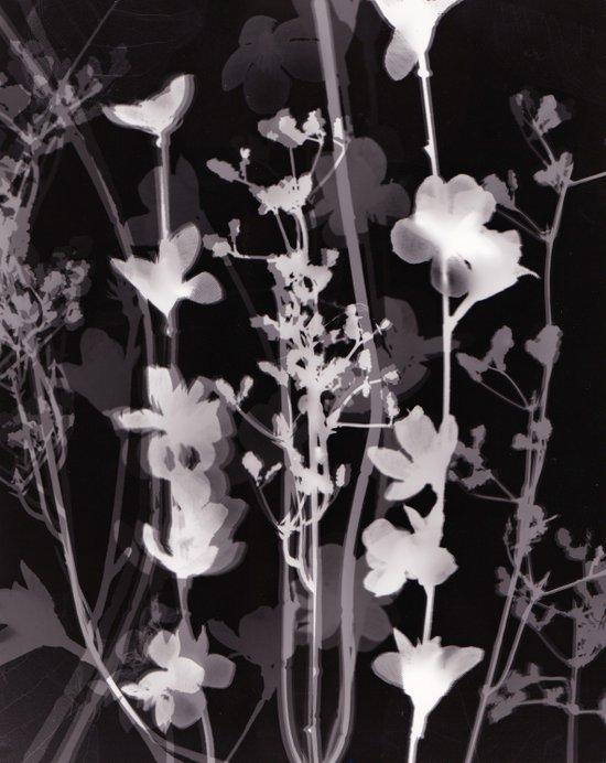 Flower Photogram #2 Art Print