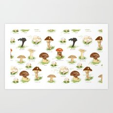 Edible Mushrooms Art Print
