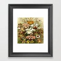 Ernst Haeckel Kunstformen der Nature Orchids Framed Art Print