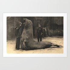 Elephant Seal Paris Parc Zoologique - Vintage / Antique French Post Card From the 1930's  Art Print
