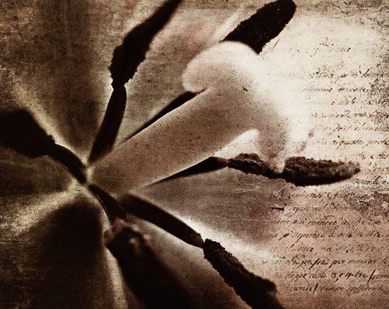 sentiments of a tulip Art Print