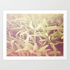 furry grass Art Print
