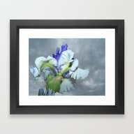 Iris (Rainy Day) Framed Art Print