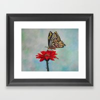 Swallowtail On A Red Ger… Framed Art Print