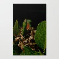 Canvas Print featuring Lizard by Russ Ham
