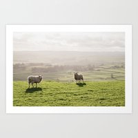 Sunlit sheep on a hilltop at sunset. Derbyshire, UK. Art Print