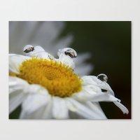 Daisy reflections Canvas Print