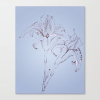 Lillys in Blue Canvas Print