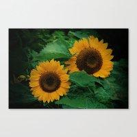 Sonnen Blumen  Canvas Print