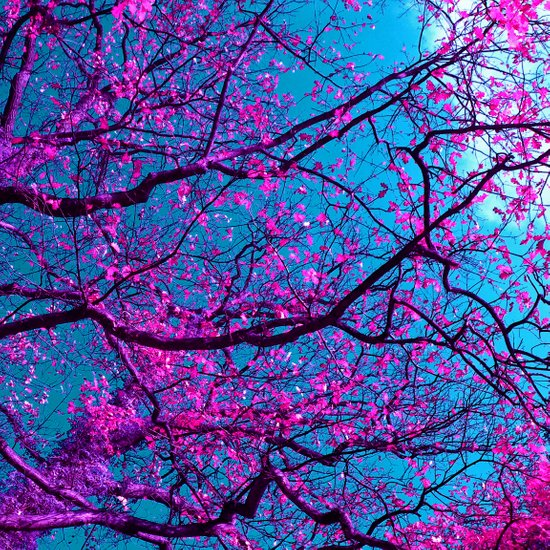 purple tree XV Art Print