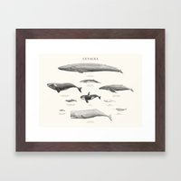 Cetacea Framed Art Print