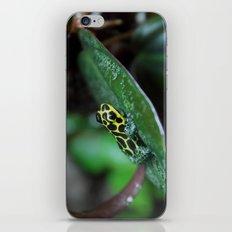 Poison Dart Frog R. Imitator Male iPhone & iPod Skin