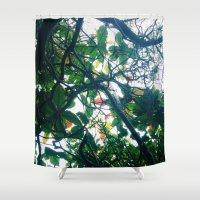 skylight Shower Curtain