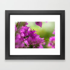 Beautiful  Brazilian flower 218  Framed Art Print