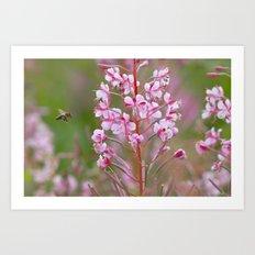 Fireweed 3990 Art Print